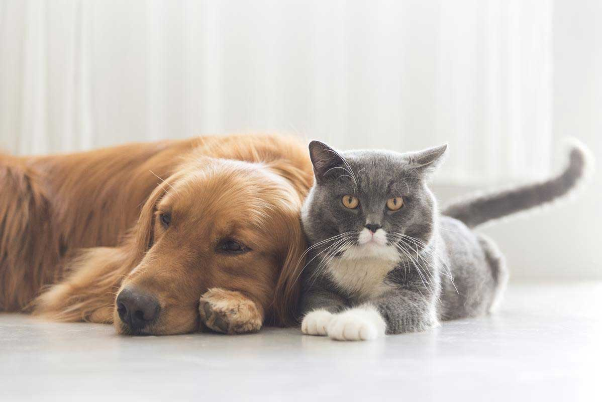 about our veterinary practice Springfield, IL